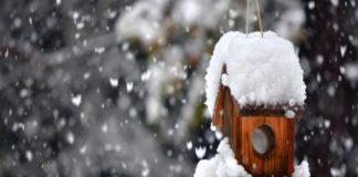 Нарешті зима: синоптики озвучили прогноз погоди до кінця тижня зі снігом і морозами - today.ua