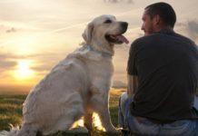 Чому собаки віддані своїм господарям: вчені з'ясували причину - today.ua