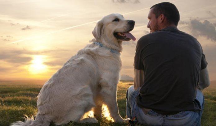 Чому собаки віддані своїм господарям: вчені з'ясували причину