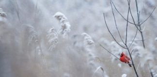 23 декабря: какой сегодня праздник, и как предсказать погоду - today.ua