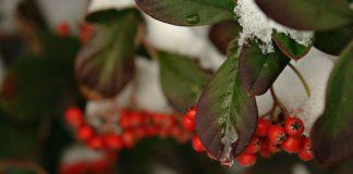 """15 декабря: какой сегодня праздник и день ангела """" - today.ua"""