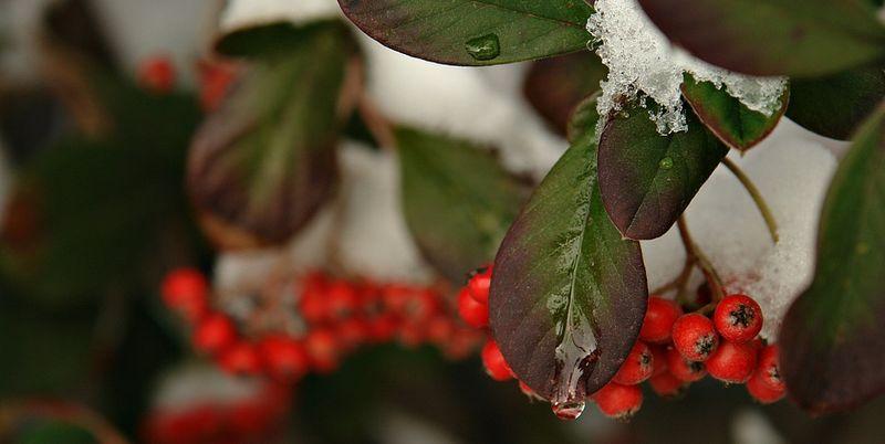 15 декабря: какой сегодня праздник и день ангела  - today.ua