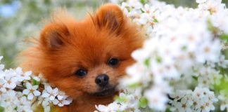 ТОП-3 породи собак-довгожителів (фото) - today.ua