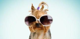 ТОП-3 найгламурніших порід собак - today.ua
