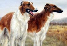 ТОП-5 порід собак, яких не можна тримати у квартирі - today.ua