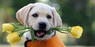 ТОП-5 найдобріших порід собак, що люблять дітей - today.ua