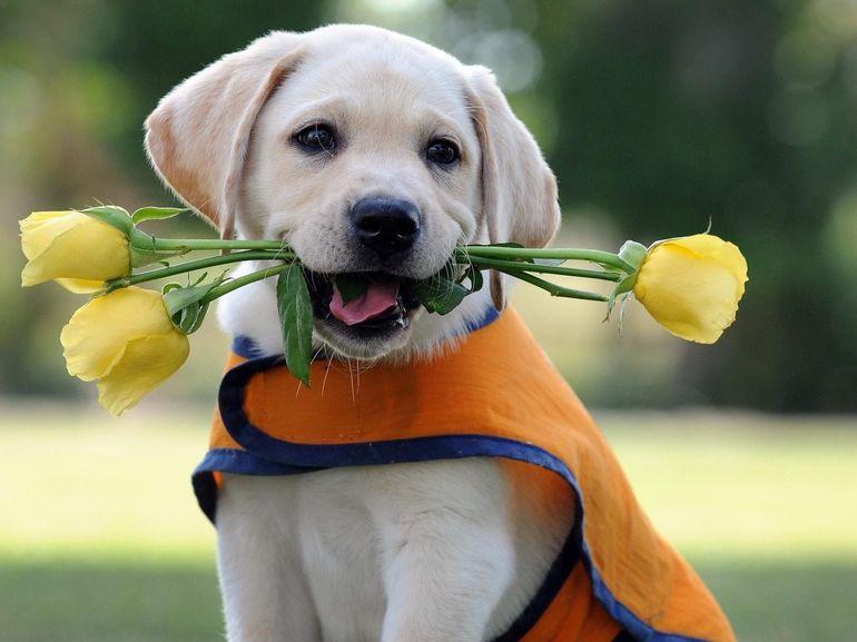 ТОП-5 самых добрых пород собак, которые любят детей - today.ua