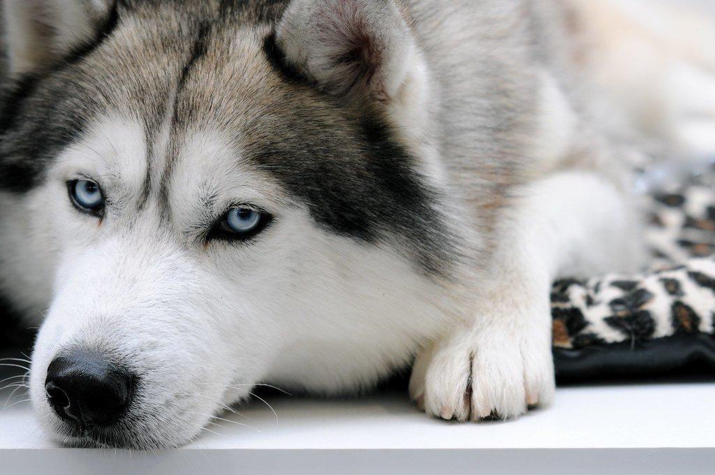 ТОП-3 найпопулярніших порід домашніх собак 2019 року