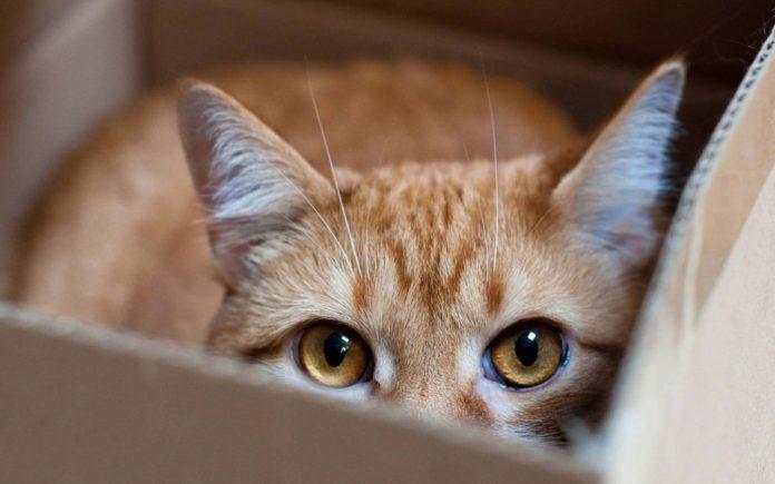 Як зрозуміти дивну поведінку кота: фахівці знайшли пояснення - today.ua