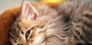 ТОП-3 правил догляду за кішками, які знають не всі - today.ua