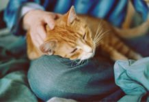 Як коти можуть продовжити людині життя: езотерик назвав унікальний спосіб - today.ua