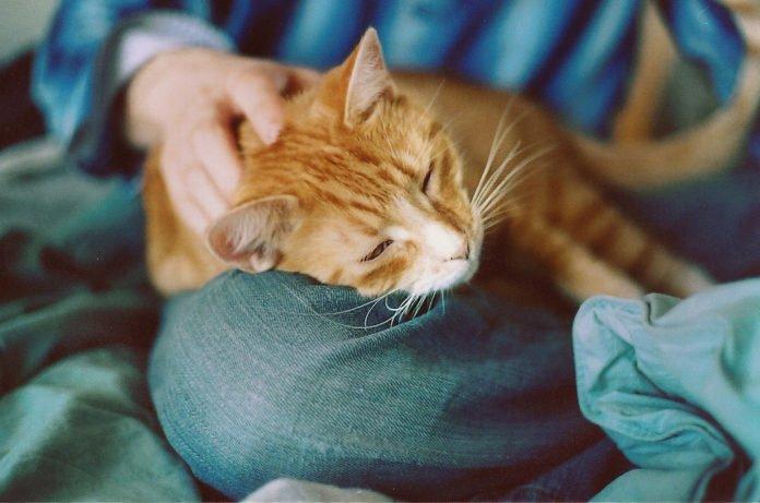 Как коты могут продлить человеку жизнь: эзотерик назвал уникальный способ - today.ua