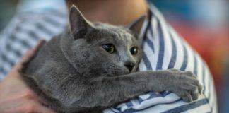 Можна заразитись від домашніх тварин: сплили нові факти про коронавірус - today.ua
