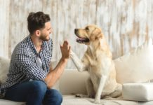 Як собаки розуміють мову господарів: вчені знайшли пояснення - today.ua