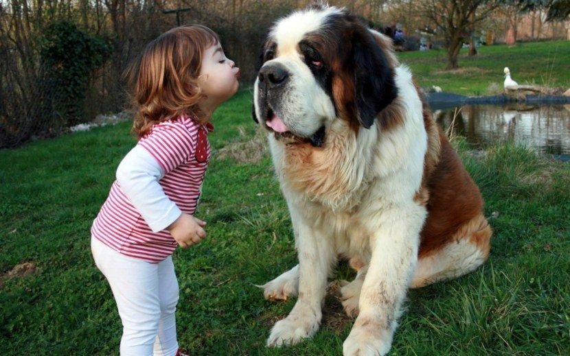 ТОП-5 самых добрых пород собак, которые любят детей
