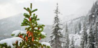 Прогноз погоды на Рождество: синоптики шокировали новостью о морозах до -23 - today.ua