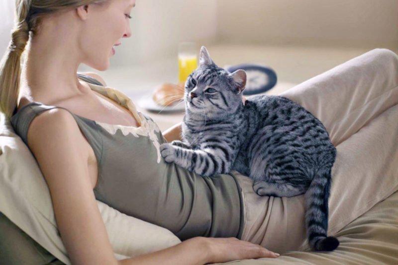Як коти можуть продовжити людині життя: езотерик назвав унікальний спосіб