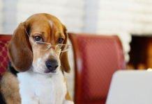 ТОП-10 найрозумніших собак - today.ua