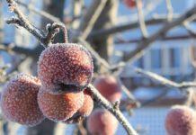 Погода на початок тижня: Очікуються заморозки і мокрий сніг - прогноз синоптиків - today.ua