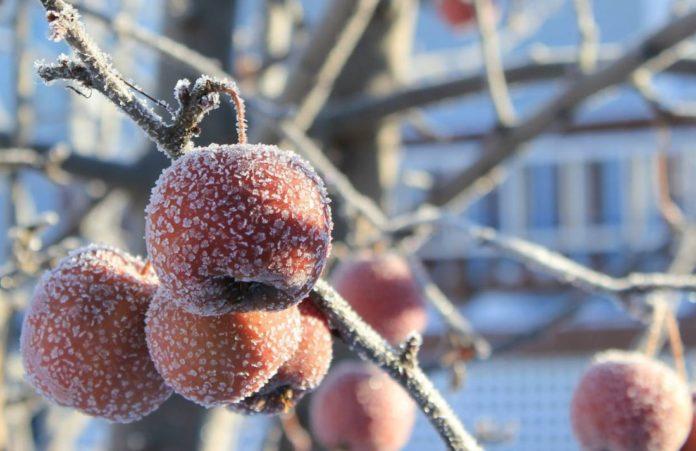 Погода на начало недели: Ожидаются заморозки и мокрый снег - прогноз синоптиков - today.ua