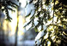 17 лютого: яке сьогодні свято, традиції і прикмети - today.ua