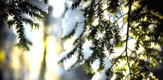 17 февраля: какой сегодня праздник, традиции и приметы - today.ua