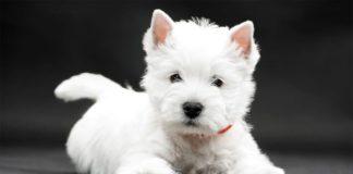 ТОП-5 пород собак, которые не могут находиться без внимания - today.ua
