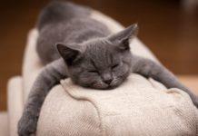Эзотерик рассказал об особенностях породы серых котов - today.ua