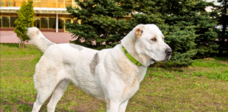 ТОП-5 вірних порід собак, які слухаються тільки господаря - today.ua