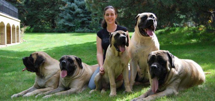 Не больше 10 лет: ТОП-5 пород собак, которые живут меньше всех