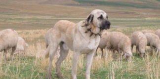 ТОП-3 найбільш рідкісних порід собак - today.ua