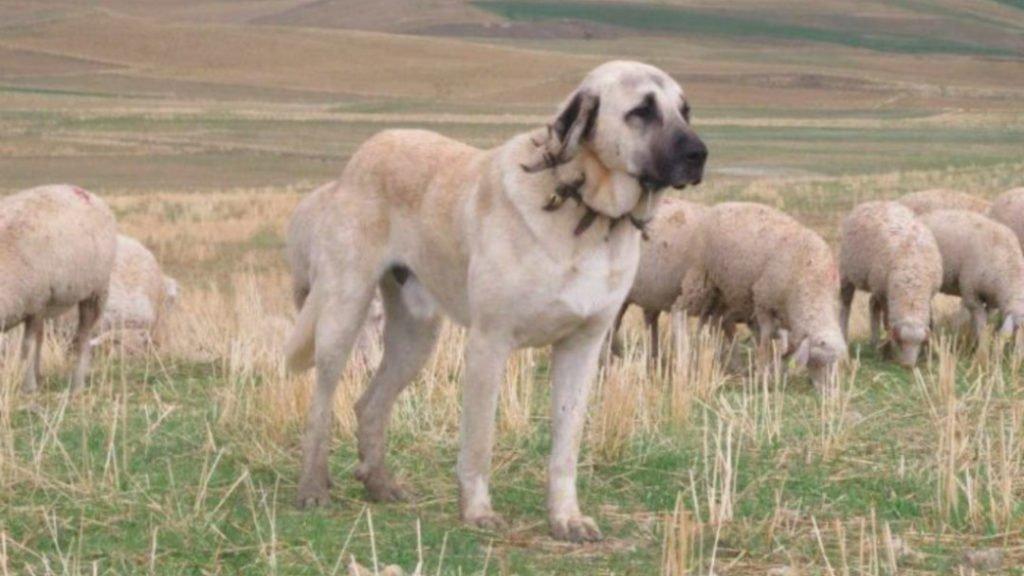 ТОП-3 самых редких пород собак - today.ua
