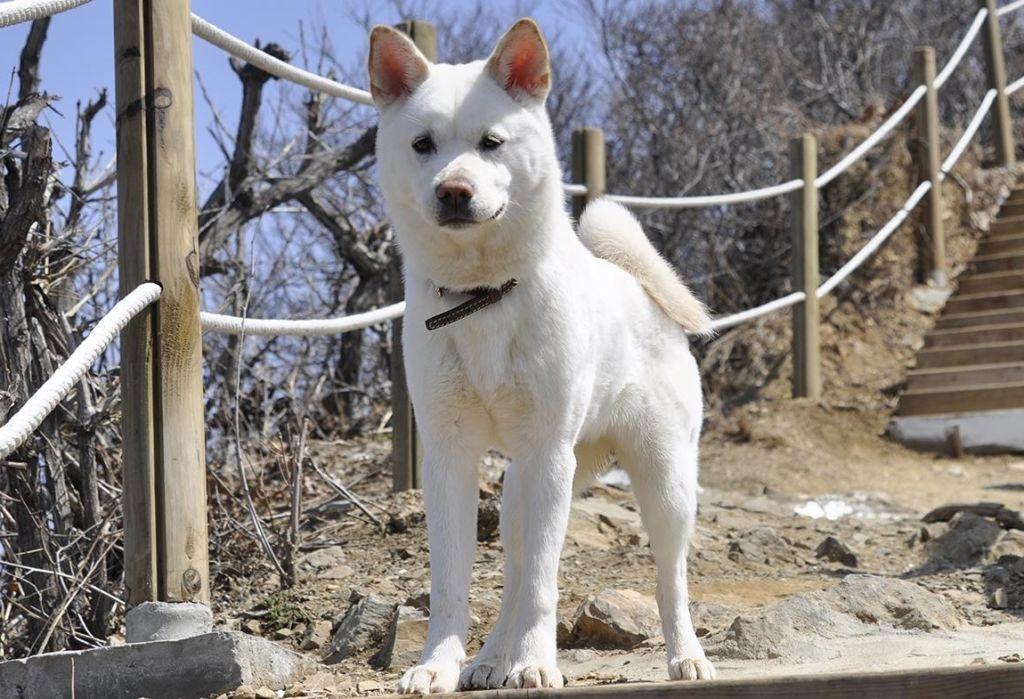 ТОП-3 самых редких пород собак