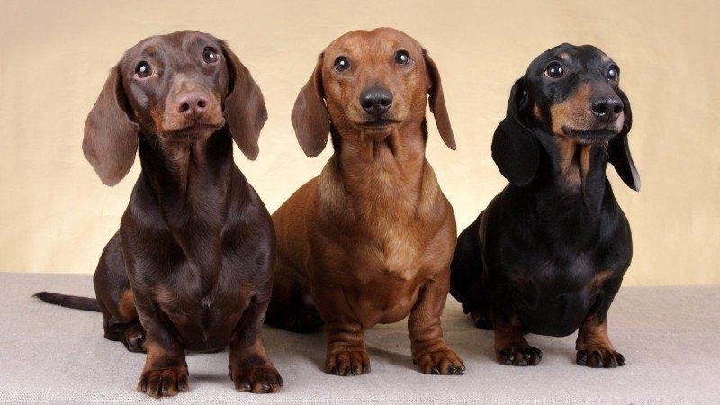 ТОП-5 найпопулярніших порід собак у світі