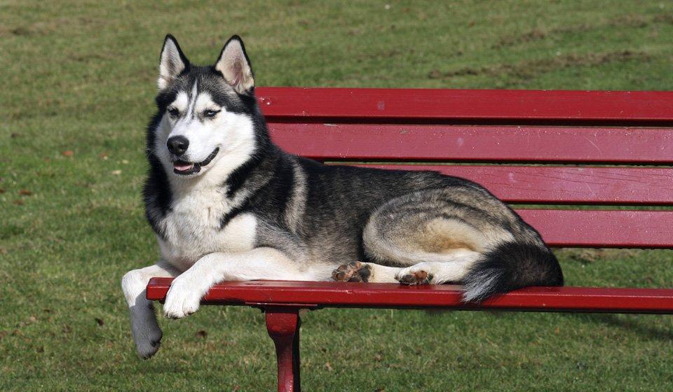 ТОП-5 порід собак для родин без дітей