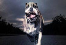 ТОП-3 породи собак, яких краще не заводити в будинку з дітьми - today.ua