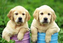 ТОП-5 найпопулярніших порід собак у світі - today.ua