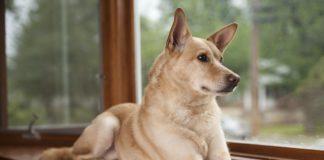 ТОП-5 вимираючих порід собак - today.ua