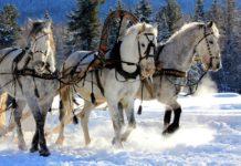 9 січня: яке сьогодні свято і що потрібно робити в цей день - today.ua