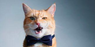 Езотерик назвав породи котів, які притягують до господарів негативну енергію - today.ua