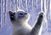 Потепління до +9: прогноз погоди на кінець січня від синоптиків Гісметео - today.ua