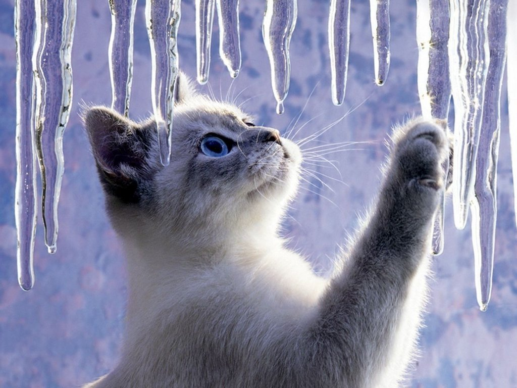 Потепление до +9: прогноз погоды на конец января от синоптиков Гисметео - today.ua