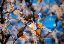 Зима настане в березні: синоптики налякали різкою зміною прогнозу погоди - today.ua