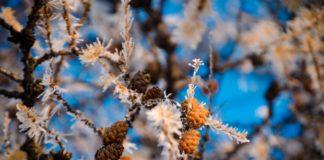 Зима придет в марте: синоптики напугали резким изменением прогноза погоды - today.ua