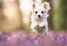 Породы собак для каждого знака Зодиака: как правильно выбрать - today.ua