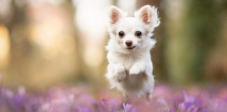 Породи собак для кожного знака Зодіаку: як правильно обрати - today.ua