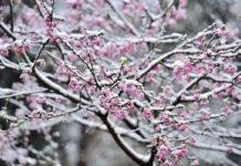 Весняне потепління: синоптики порадували прогнозом погоди на вихідні - today.ua