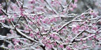 Весеннее потепление: синоптики порадовали прогнозом погоды на выходные - today.ua