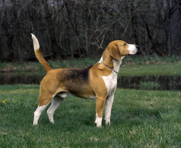 """Не лише друг, але &quotталісман"""": езотерик назвав породи собак, які покращать ваше життя - today.ua"""