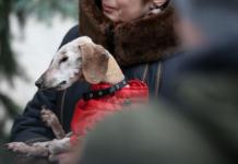 У Києві зареєстрували найстарішу собаку України (фото) - today.ua